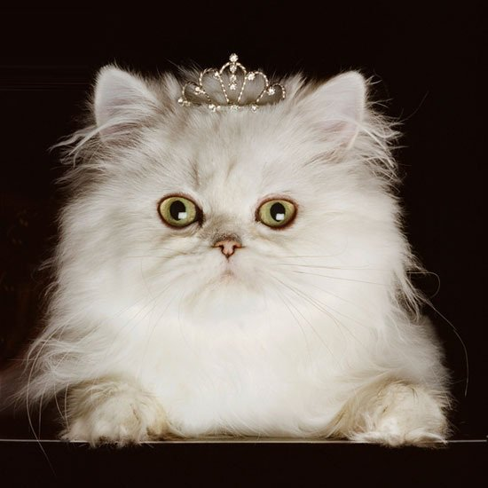 Read more about Princess kitten canvas wall art