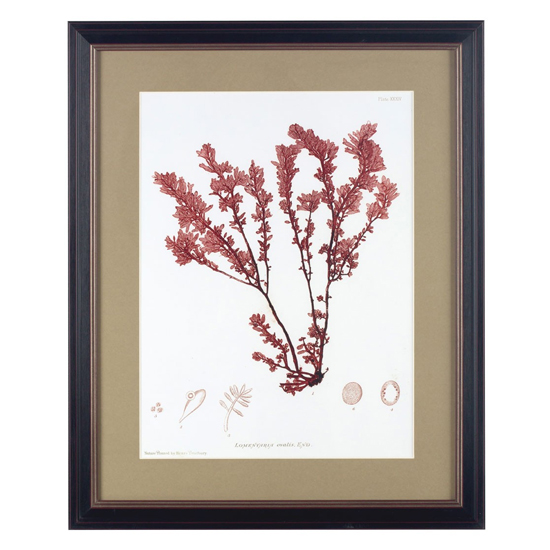 Agatiyo Framed Alga Wall Art