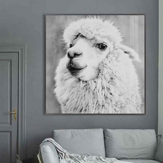 Cursa Alpaca Picture Glass Wall Art