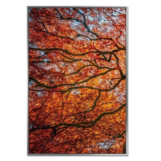 Acrylic Framed Autumn Tree Pictures (Set of Three)_2