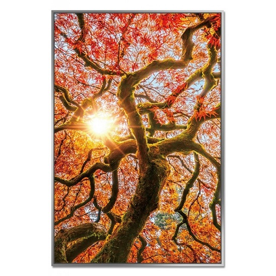 Acrylic Framed Autumn Tree Pictures (Set of Three)_3