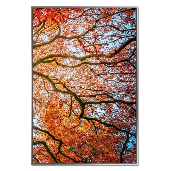 Acrylic Framed Autumn Tree Pictures (Set of Three)_4