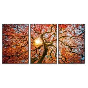 Acrylic Framed Autumn Tree Pictures (Set of Three)