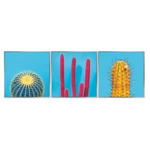 Acrylic Framed Cactus Pictures (Set of Three)